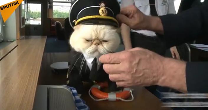 Des chats à bord!