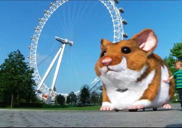 Un hamster géant à l'assaut de la capitale brittanique
