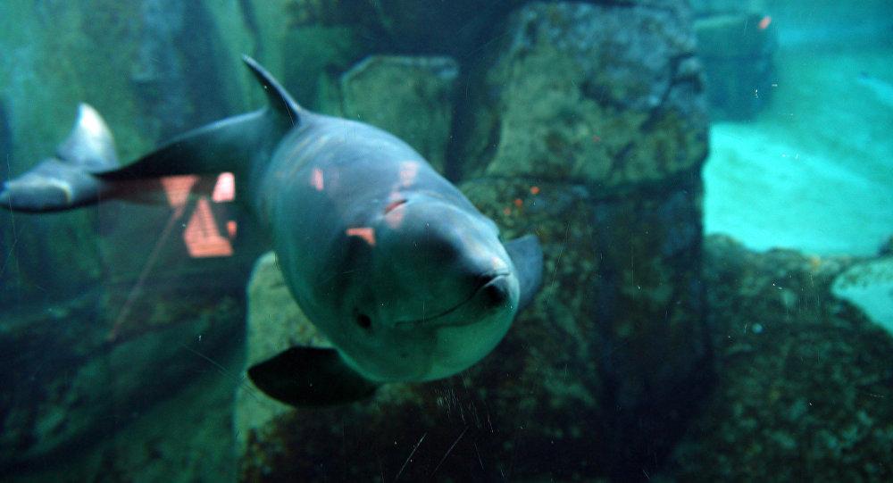 Cochon de mer