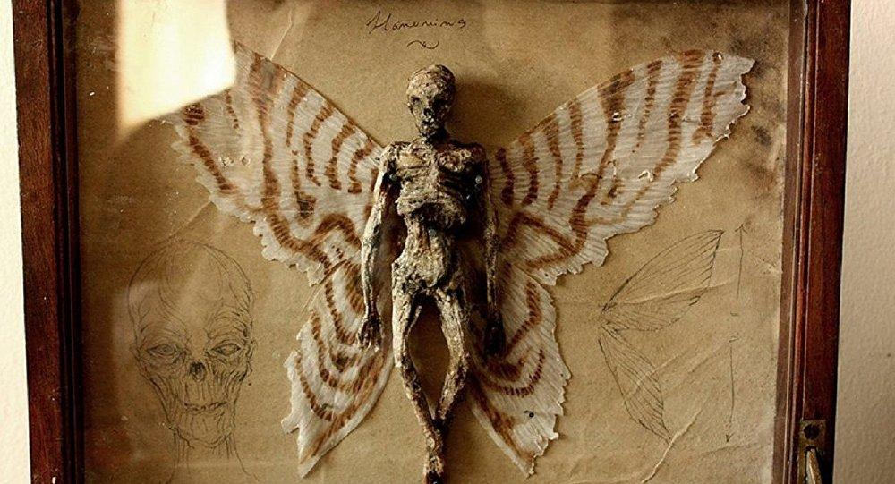 Une squellette d'une fée