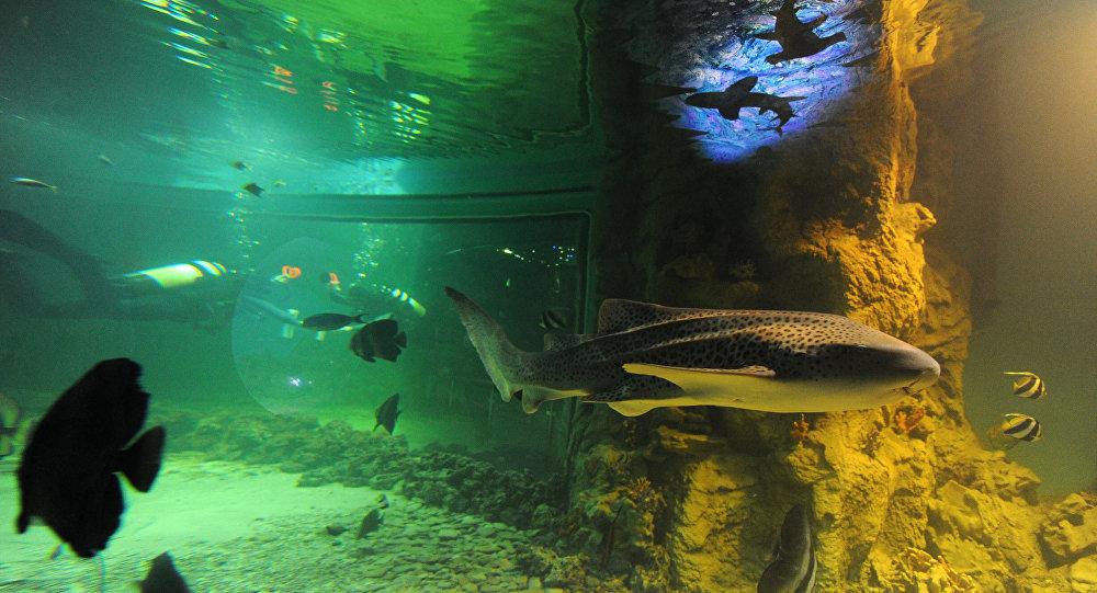La pollution marine son comble les poissons adorent le for Aquarium plastique