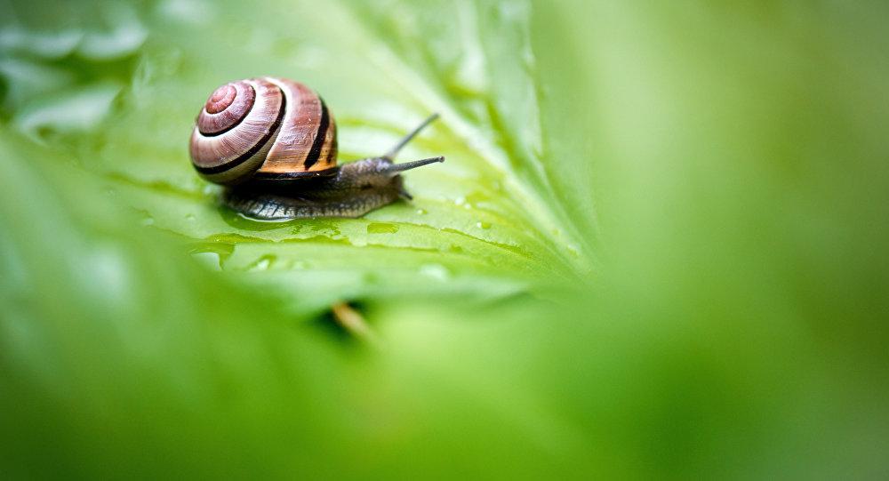 Un escargot trouve son deuxième moitié grâce à un flashmob!