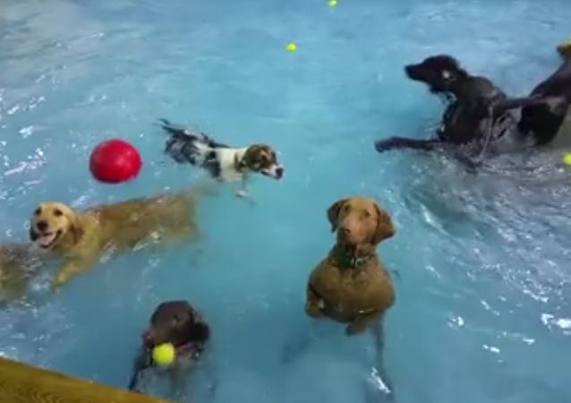 La solitude dans la piscine