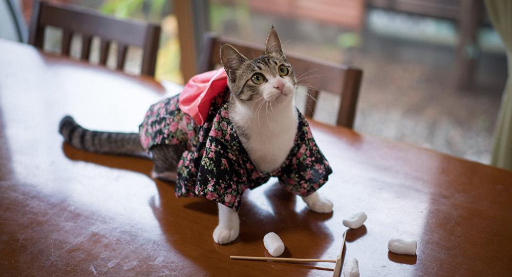 Un chat portant un kimono