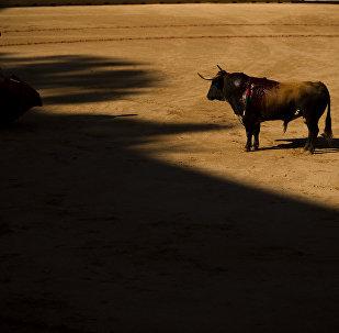 un taureau (image d'illustration)