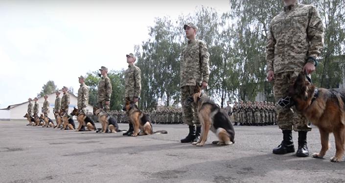 Des chiens ukrainiens prêtent serment