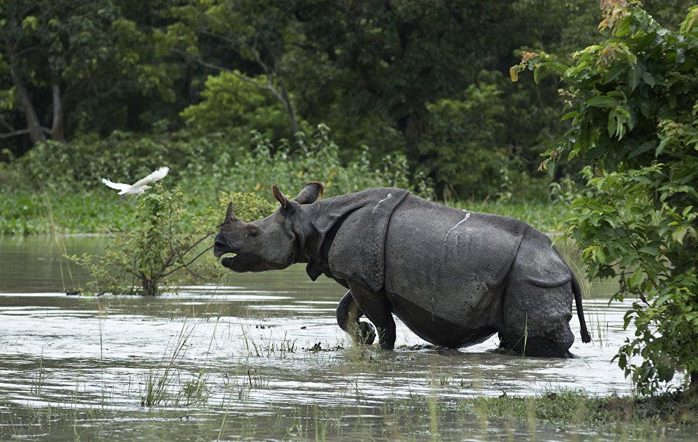 Des moussons fortes ont provoqué une inondation dans l'Etat indien d'Assam