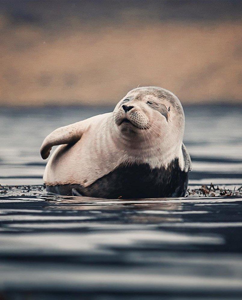 Portraits grandeur nature de la faune nordique