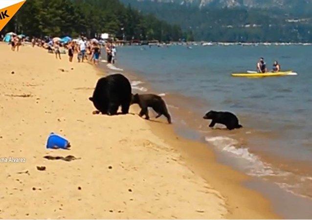 Une famille ours se baigne au milieu des touristes