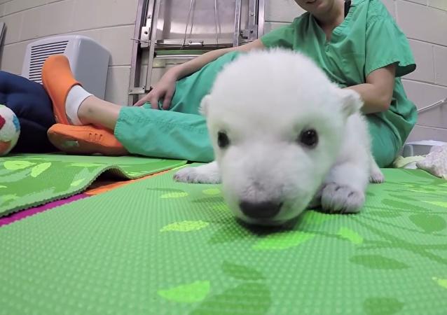 La vie quotidienne d'un ours polaire