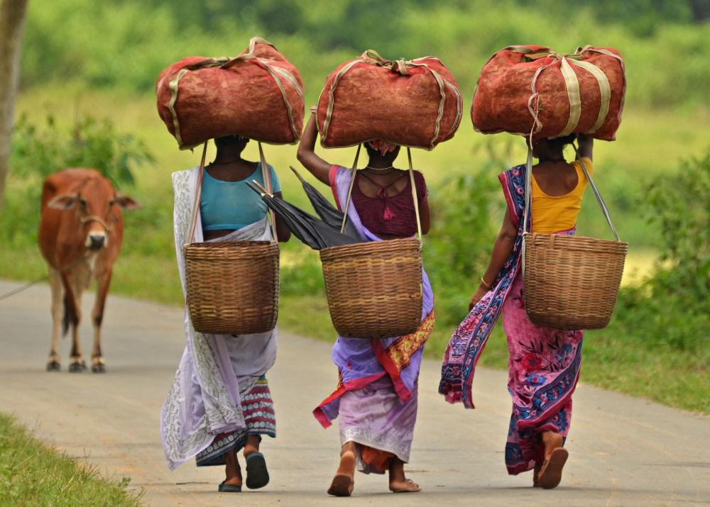 Des femmes portent des sacs de thé dans l'Etat d'Assam en Inde
