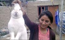 Quand ton lapin domestique est accro… à la marijuana