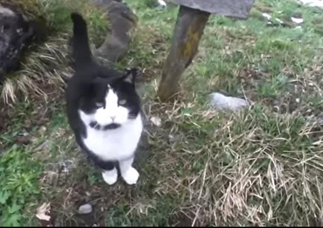 un chat sauveteur suisse