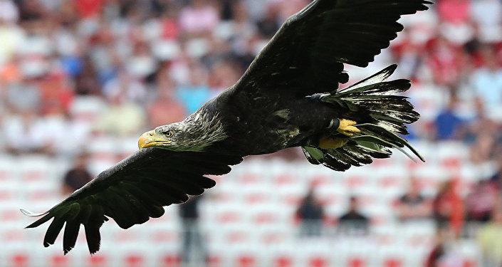 Des aigles aideraient la police UK à lutter contre des drones chargés de produits illégaux