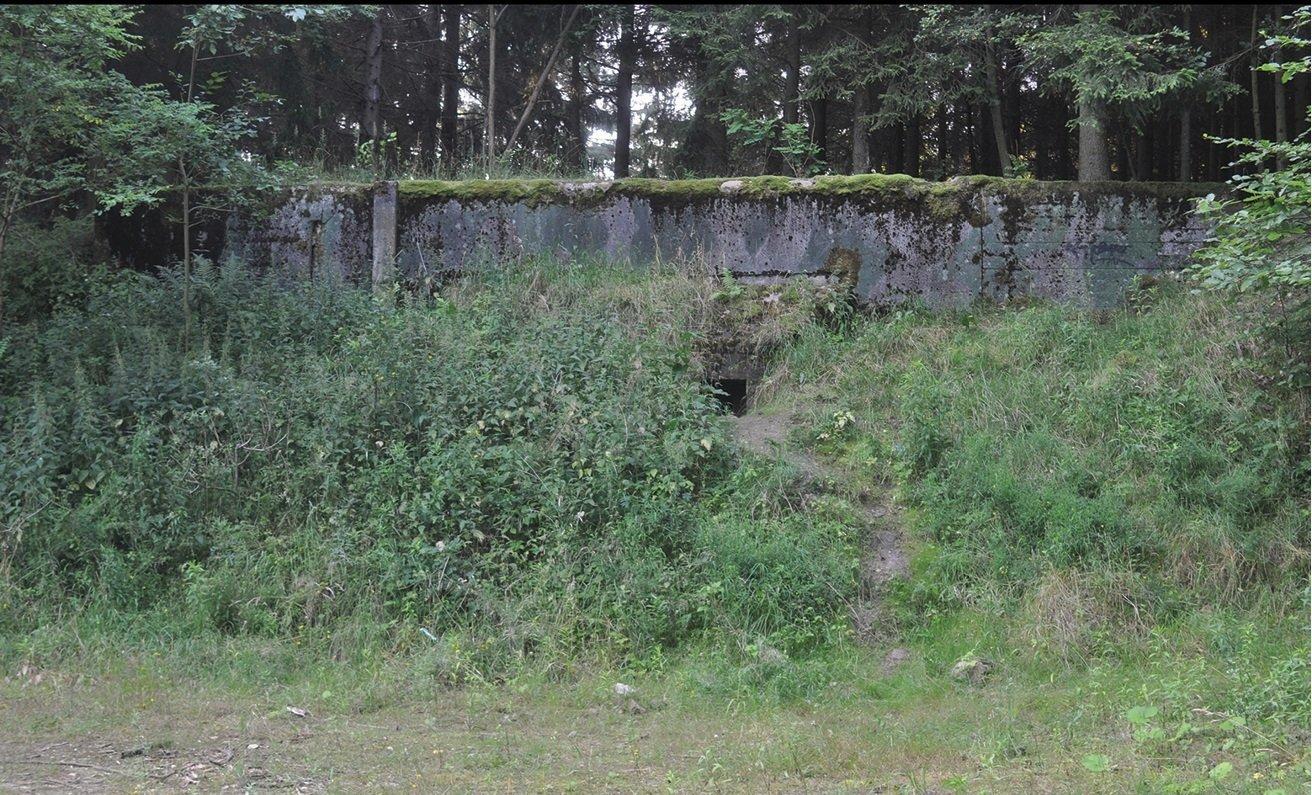 Des fourmis ont survécu dans un bunker nucléaire sans eau et sans reine 17.07.2014