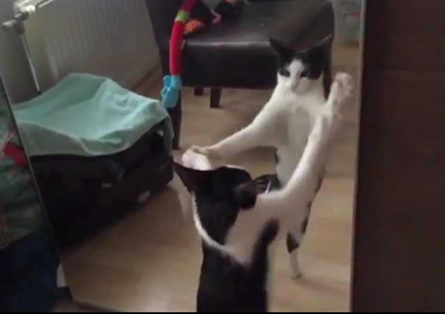 Un chat se bat contre son reflet en slow motion!