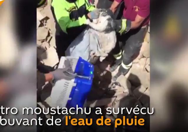 Sauvetage d'un chat 15 jours après le séisme