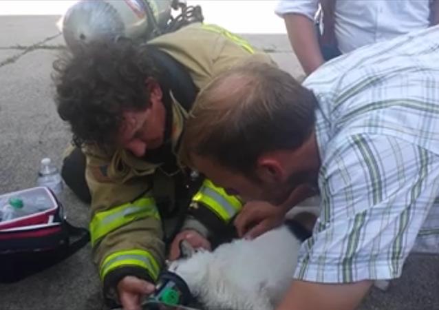 Sauver un chat avec un masque à oxygène