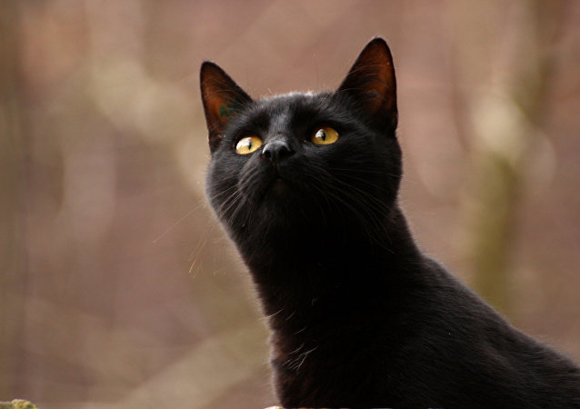 Lucifer, le chat-infirmier devenu star du Web