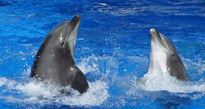 L'échange de signaux entre les dauphins, une conversation entre deux personnes