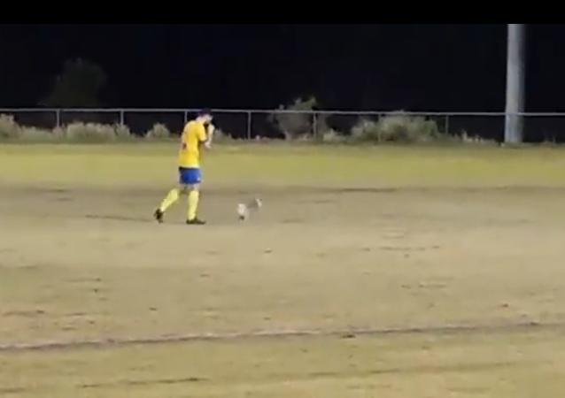 Voici un koala joueur de foot