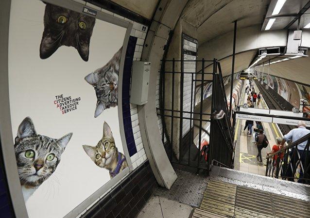 Marre des pubs! Les Londoniens veulent voir des chats dans leur métro