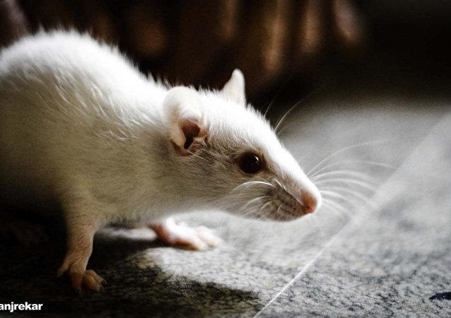 Quand une petite souris se transforme en terrible rapace