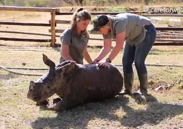 Un bébé rhinocéros profite de son bain pour la première fois