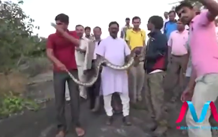 Il ne faut pas faire de selfies avec des serpents