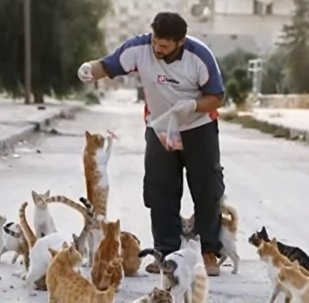 Mohammad Alaa Jaleel et les chats