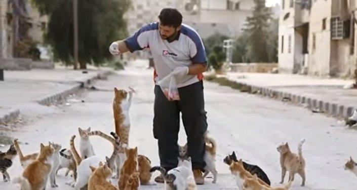Mohammad Alaa Jaleel et les chats