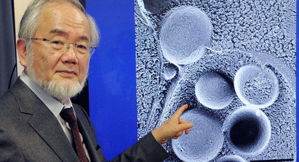 Autophagie, Nobel de médecine 2016