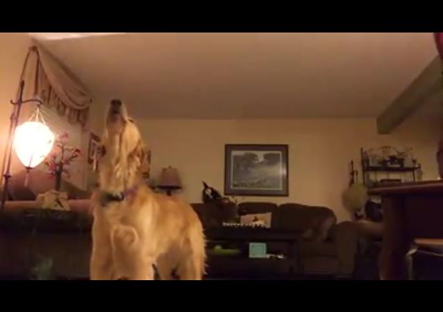 Ce chien qui chante en duo avec une star mondiale de l'opéra