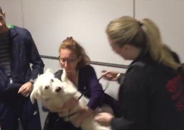 Une famille de réfugiés syriens retrouve son chien au Canada