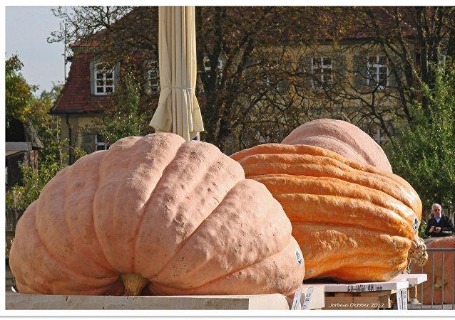 Des courges géantes à Ludwigsburg