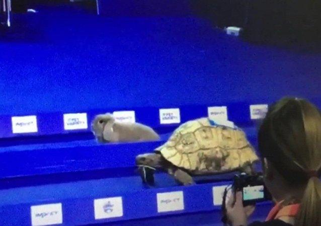 Lapin vs tortue: la course mythique a enfin eu lieu!