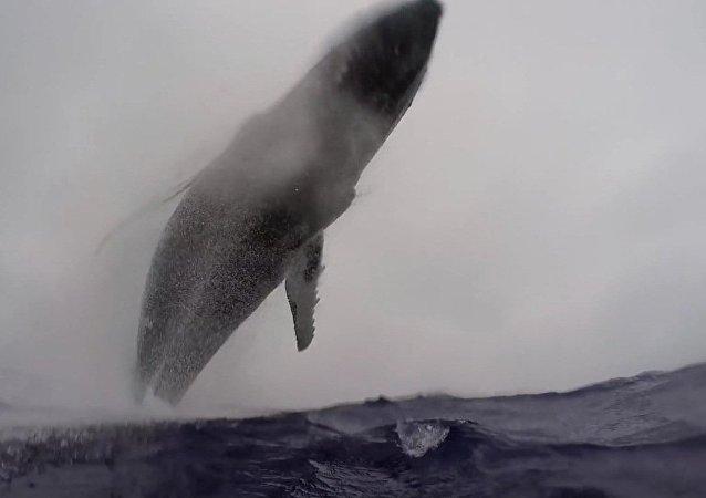 Une baleine volante