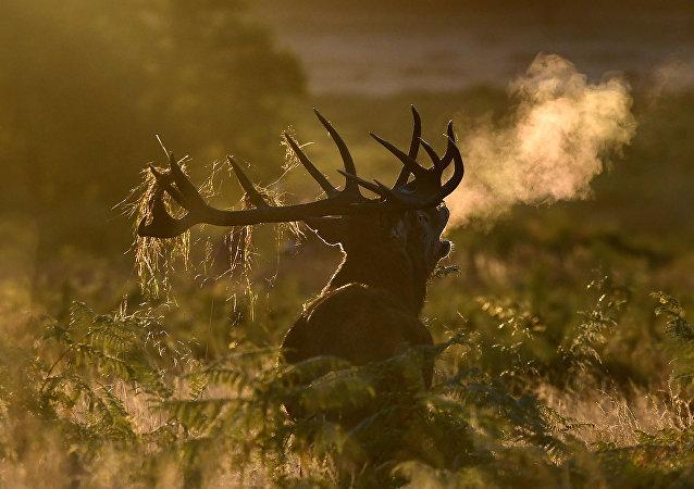 Pris pour un cerf, ce chasseur est tué par erreur aux États-Unis
