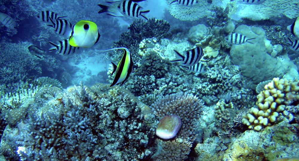 Non, la Grande barrière de corail n'est pas morte!