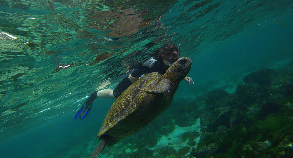 tortue, Galapagos, image d'illustration