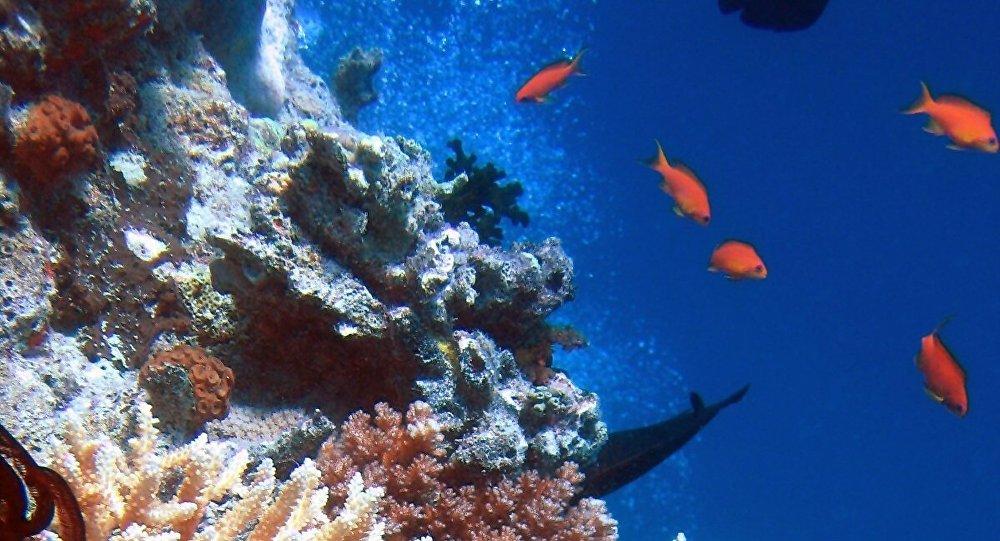 Étoile de mer sur du corail