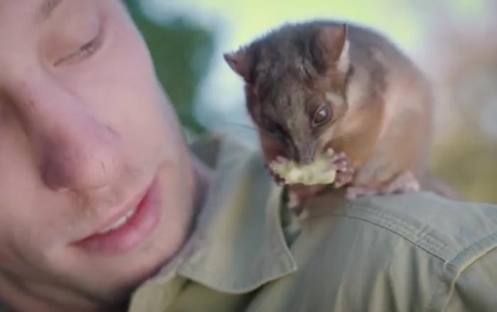 Une amitié émouvante entre un opossum et un employé de zoo
