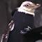 Un pingouin sans plumes reçoit une tenue de plongée sur mesure