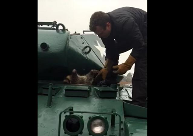 Le sauvetage hilarant d'un raton laveur grassouillet coincé dans un char