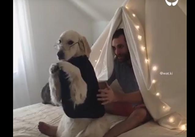 Il apprend à son chien à faire une «chute de confiance»