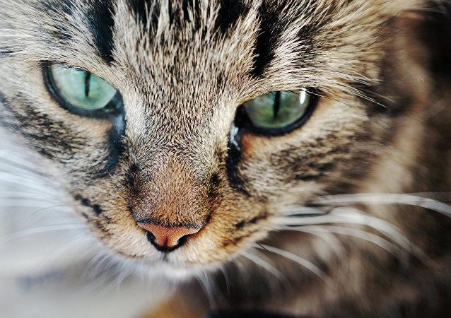 Un Hachikō-chat: elle attend sa maîtresse près de sa tombe depuis un an