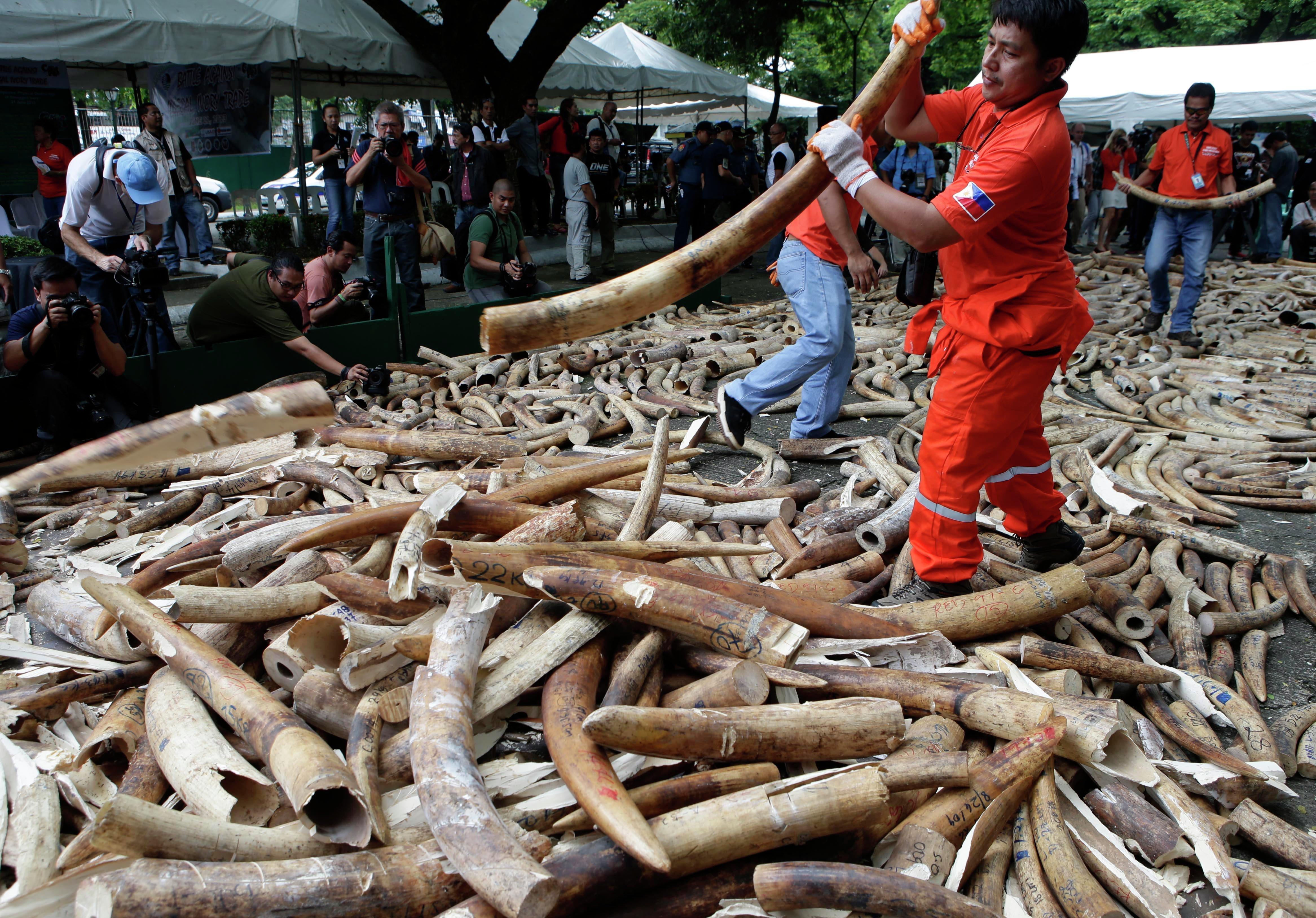 Plus de 50.000 éléphants par an victimes de braconnage