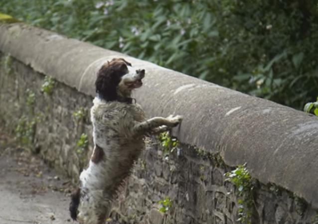 Pont des suicides de chiens