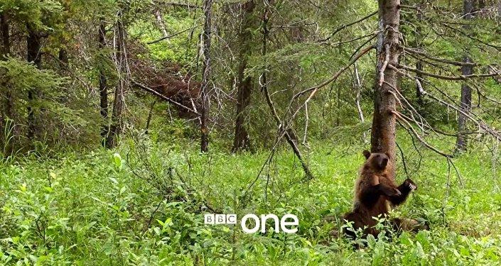 Quand un ours danse le twerk