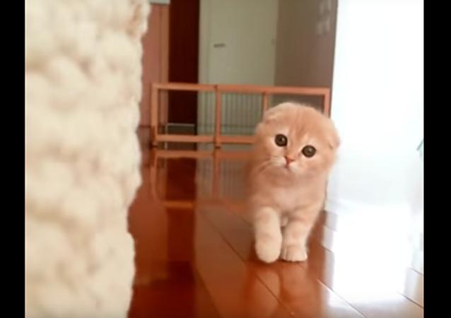 Ce chaton qui pourrait jouer dans un film d'horreur
